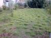 zoysia-tenuifolia-en-godets-1-an-apras-plantation