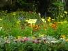 vivaces-et-annuelles-fleuries-1