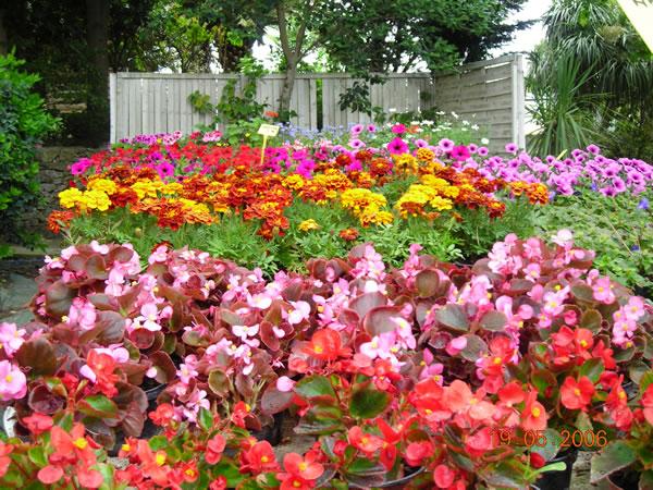 vivaces-et-annuelles-fleuries